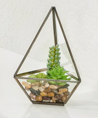 SucculentTerrarium