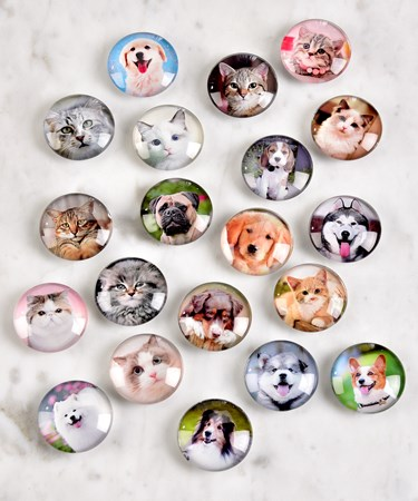 AnimalDesignMagnets20AsstwDisplayer