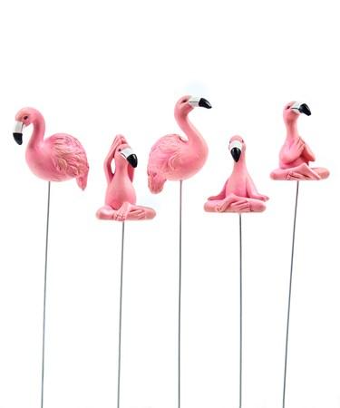 FlamingoPlantPics5Asst