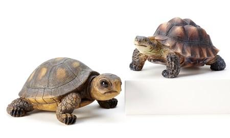 TurtleStatuary2Asst