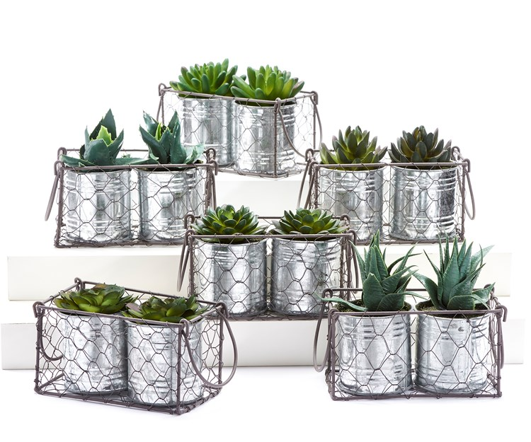 Potted Plant Sets, 6 Asst.