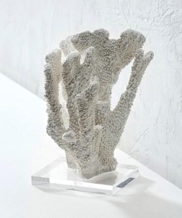 Polystone Coral w/Acrylic Base
