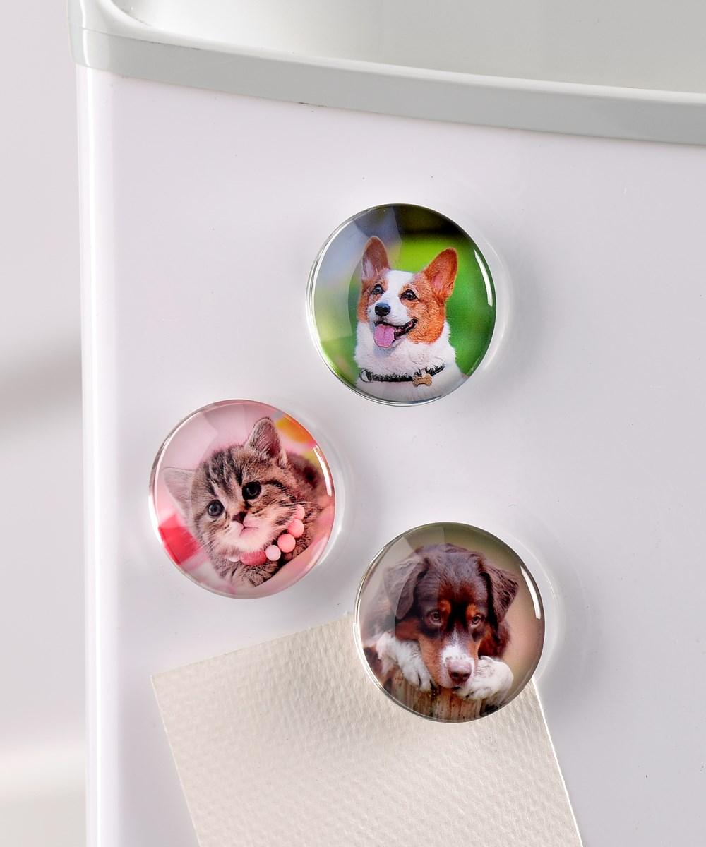 Round Glass Animal Design Magnets w/Displayer