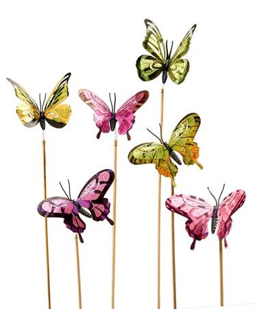 ButterflyPlantPics6Asst