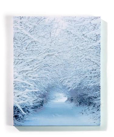 SnowCoveredTreesLightUpCanvas