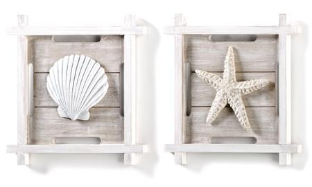 ShellStarfishWallDecor2Asst