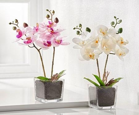 Orchid2Asst